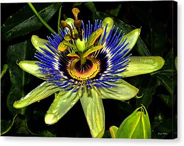 Passion Flower 003 Canvas Print by George Bostian