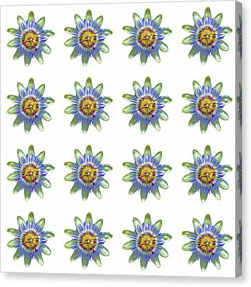 Passion Flower Design Canvas Print by Bishopston Fine Art