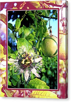 Passion Flower Fruit W Red Border Canvas Print