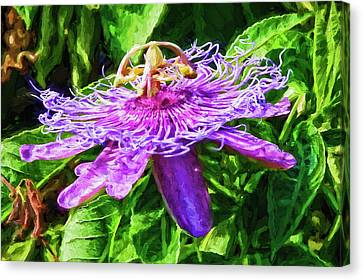 Passion Flower Canvas Print by HH Photography of Florida