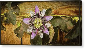 Passion Flower Canvas Print by Kenneth Roberts