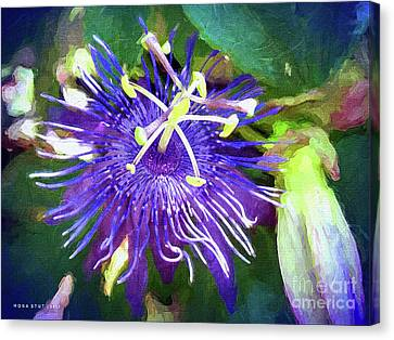Passion Flower Canvas Print by Mona Stut