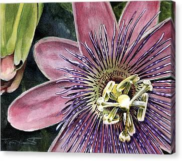 Passiflora Canvas Print - Passion Flower by Thomas Hamm