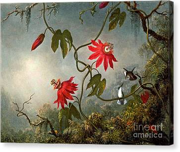Passion Flowers And Hummingbirds 1870 Canvas Print