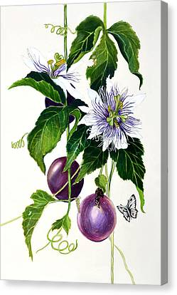 Passion Fruit Canvas Print by Lorraine Romaior