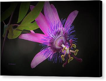 Passionate About You Canvas Print by B Vesseur