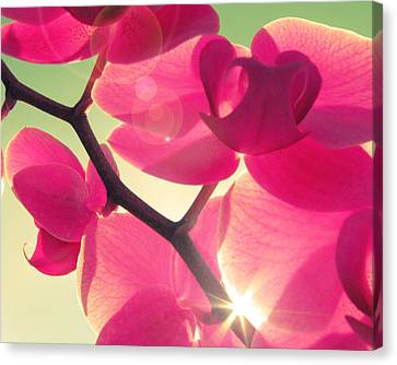 Fuchsia Canvas Print - Passionato by Amy Tyler