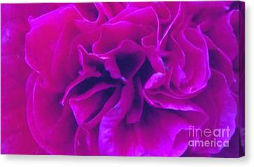 Passionbloom Canvas Print by Kasha Baxter