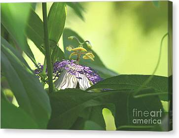 Passionflower Blooming Canvas Print by Robyn King