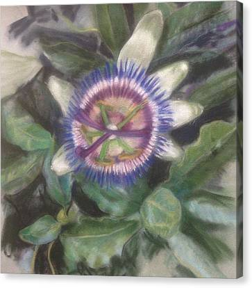 Passionflower Canvas Print by Kathryn Lewis