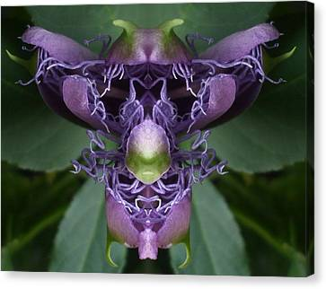 Passionflower Princess Canvas Print by Melody Harris