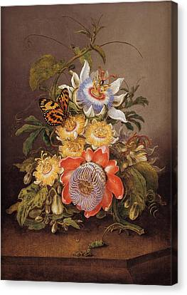 Passionflowers Canvas Print by Ferdinand Bauer