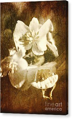 Past Life Flowers Canvas Print by Jorgo Photography - Wall Art Gallery