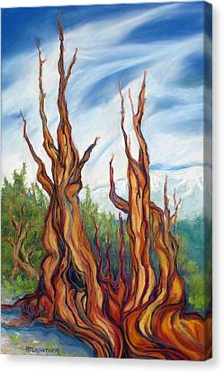 Canvas Print featuring the painting Pastel Bristlecone by Pat Crowther
