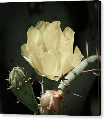 Pastel Cactus Bloom Canvas Print