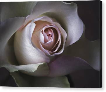 Pastel Flower Rose Closeup Image Canvas Print by Artecco Fine Art Photography
