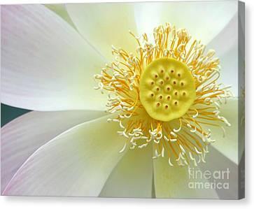 Pastel Lotus Too Canvas Print by Sabrina L Ryan