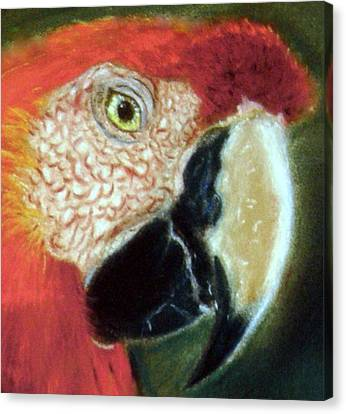 Canvas Print featuring the pastel Pastel Of Red On The Head  by Antonia Citrino