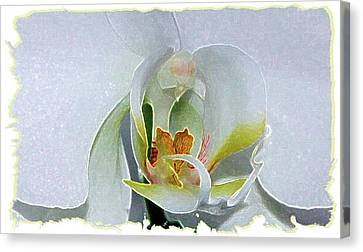 Canvas Print featuring the digital art Pastel Orchid by Ellen Barron O'Reilly