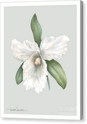 Pastel Orchid Canvas Print by Meridith Martens