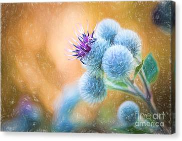 Pastel Painting Flower - Flowering Great Burdock Canvas Print by Lubos Chlubny