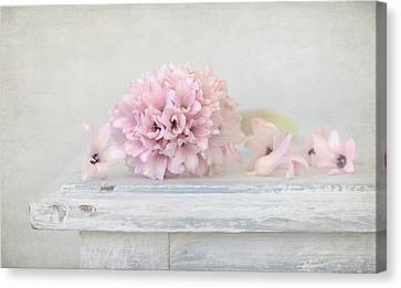 Interior Still Life Canvas Print - Pastel Pink Hyacinth by Kim Hojnacki