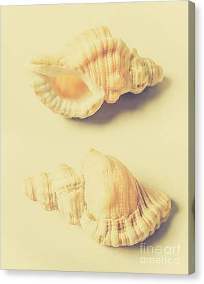 Pastel Seashell Fine Art Canvas Print