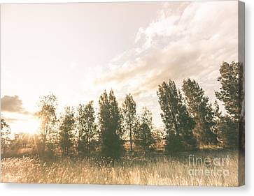Pastel Sunset Forest Canvas Print