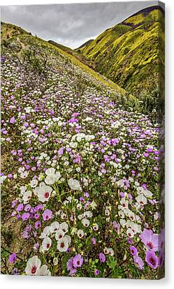 Pastel Super Bloom Canvas Print by Peter Tellone
