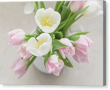 Canvas Print featuring the photograph Pastel Tulips by Kim Hojnacki
