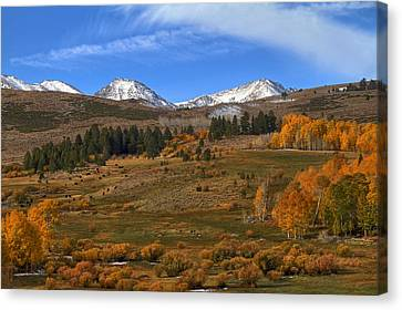 Pastoral View Canvas Print by Donna Kennedy