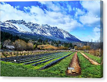 Patagonian Farmlands Canvas Print