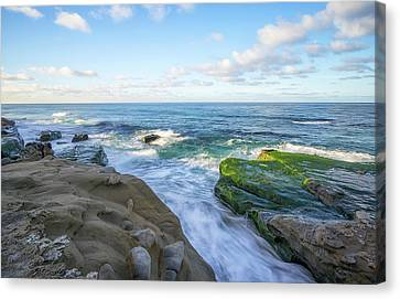 Patch Of Green Canvas Print by Joseph S Giacalone