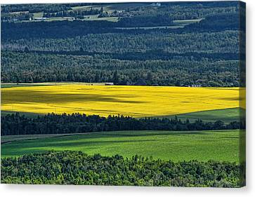 Canvas Print featuring the photograph Patch Of Yellow by Gary Smith