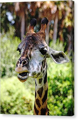 Patches Canvas Print by Debbie Oppermann