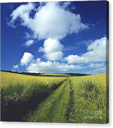 Path In A Countryside Canvas Print by Bernard Jaubert