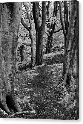Path In Crownest Woods Canvas Print