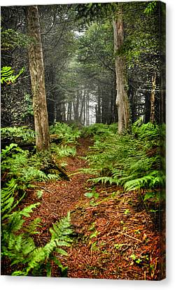 Path In The Ferns Canvas Print
