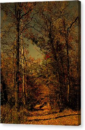 Path Into The Woods Canvas Print by Nina Fosdick