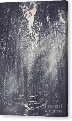 Foggy Day Canvas Print - Path Leading Through Mysterious Woodlands by Jorgo Photography - Wall Art Gallery