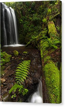 Path Of Life Canvas Print by Mike Reid