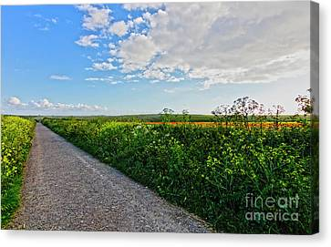Path Through The Fields Canvas Print by Terri Waters