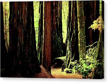 Path Through The Forest Edge . 7d5432 Canvas Print by Wingsdomain Art and Photography