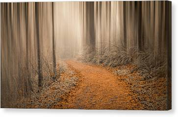 Path Through The Misty Woods Canvas Print