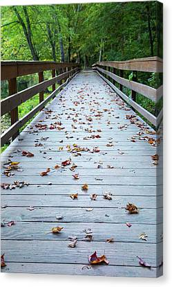 Canvas Print - Path To Autumn by Karol Livote