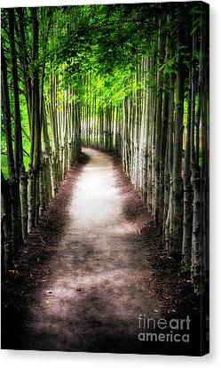 Path To My Destination Canvas Print by George Oze