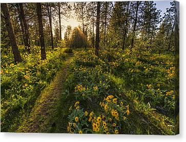 Path To The Golden Light Canvas Print by Mark Kiver