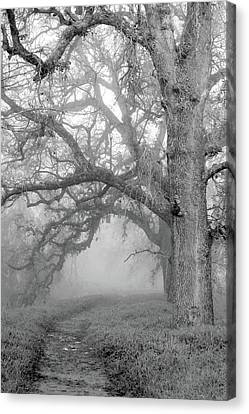 Uc Davis Canvas Print - Path To The Unknown by Alessandra RC