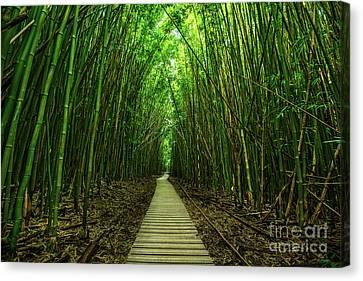 Path To Zen Canvas Print