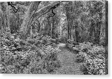 Jogging Canvas Print - Paths Of Life by JC Findley